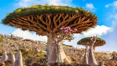 Strangely Beautiful Travel Destination You Should Definitely Check Out - Socotra Island
