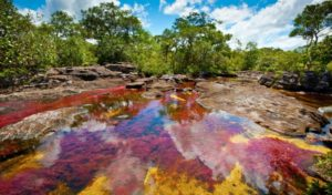 Caño Cristales Facts - Get To Know About The River With Five Colors