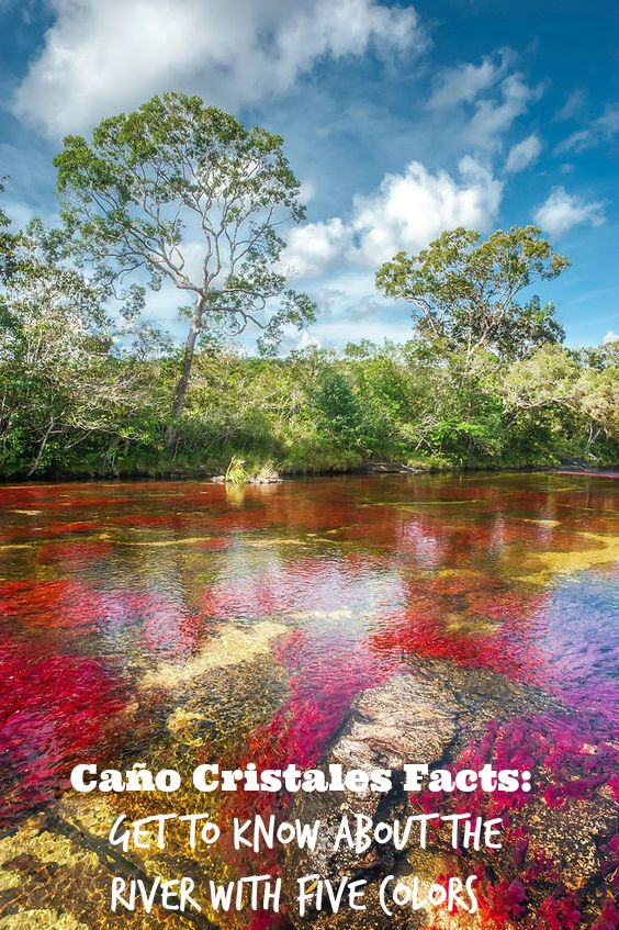 The River With Five Colors - Caño Cristales Colombia