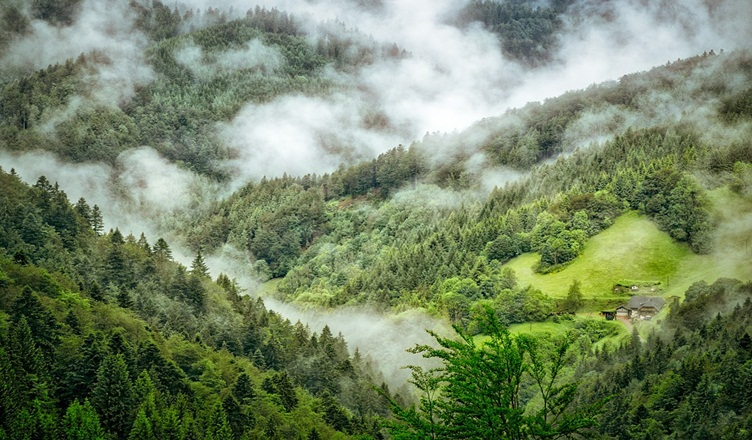 World's Amazing Forest Travel Destination You Should Definitely Visit