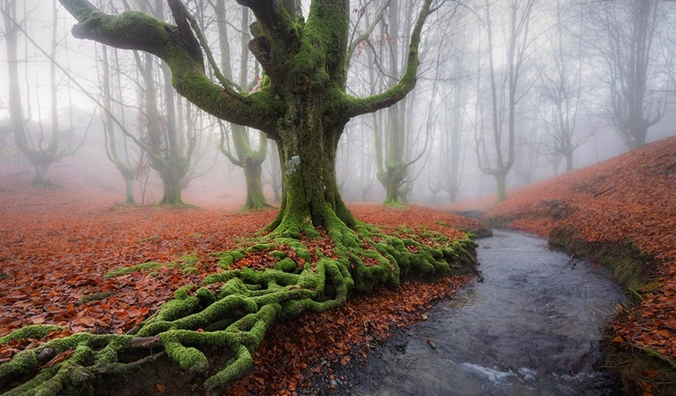 Otzarreta Forest, Gorbea Natural Park Spain -World's Amazing Forest Travel Destination