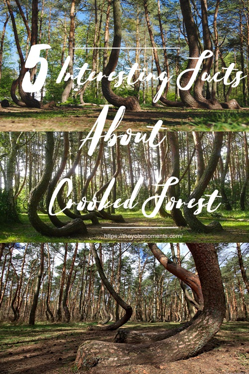 Facts About Crooked Forest Poland - The Yolo Moments