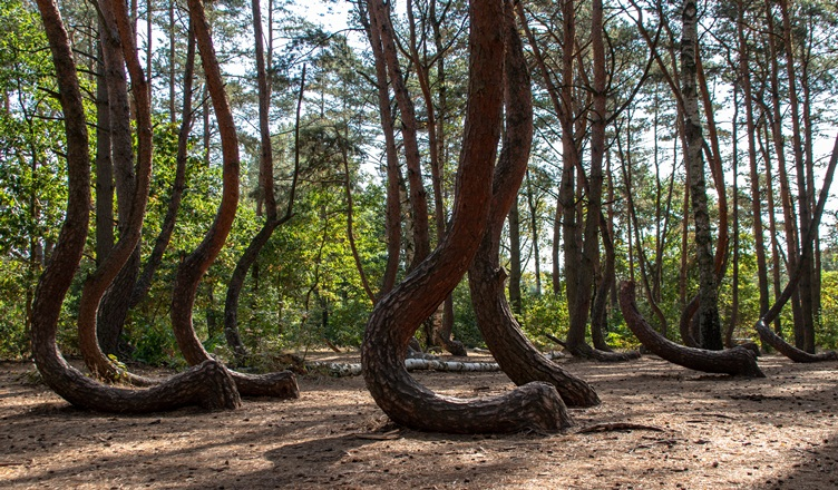 Facts About Crooked Forest - The Yolo Moments